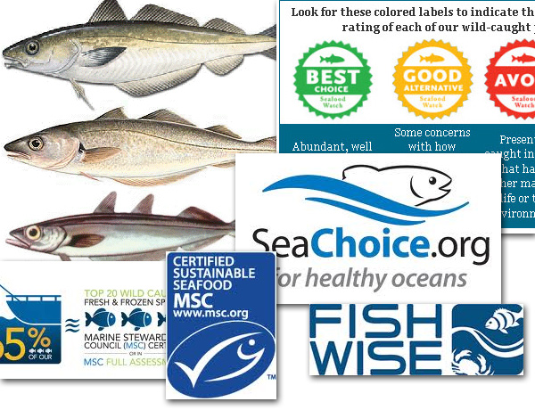 Reasearch for Fish Chil Labels - Whiting Fish and Sustainable Fisheries